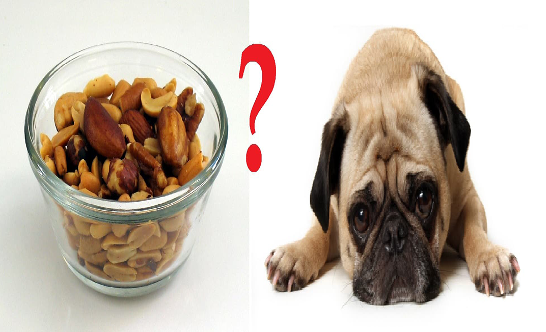 Are Cashew Nuts Poisonous To Dogs