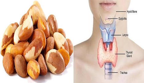 What is thyroid – Are Brazil nuts good for thyroid?
